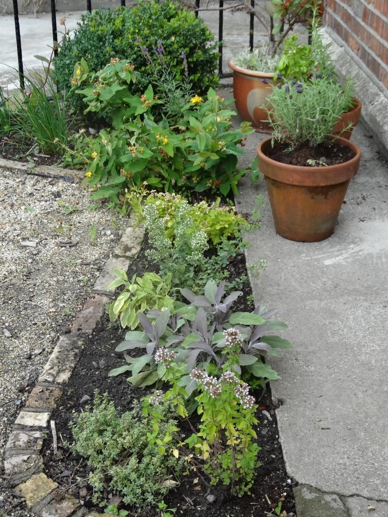 Gardens Aug 2013 019