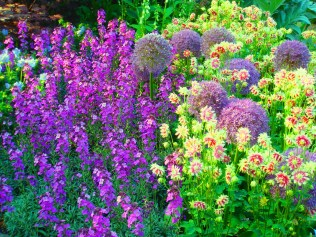 Lush bee-friendly summer planting