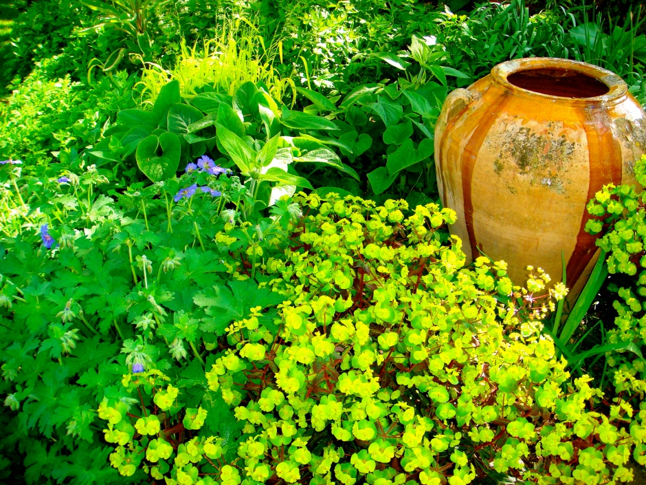 Urn and Euphorbia