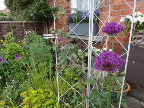Alliums and obelisk with the windowbox behind
