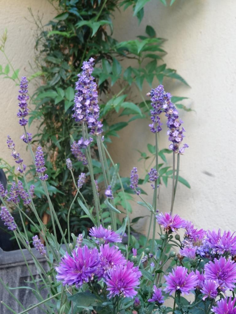 50 Ger garden July13 029