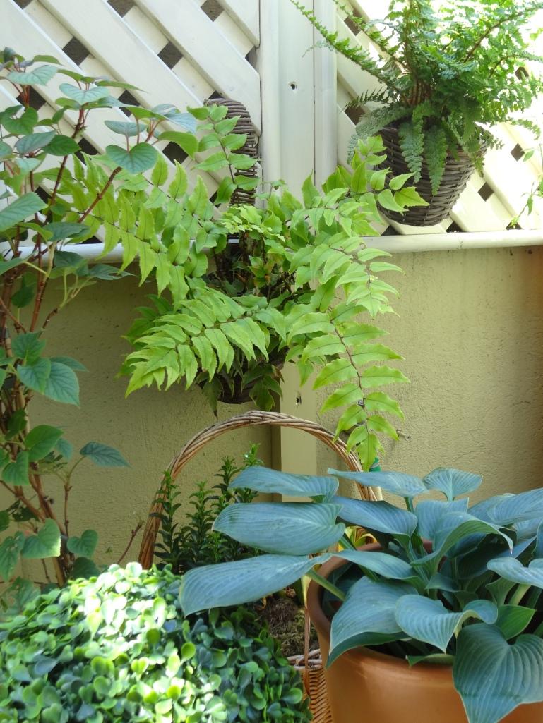 gardens dublin june 2013 007