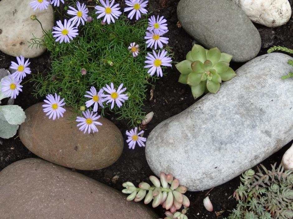 Gardens Aug 2013 021