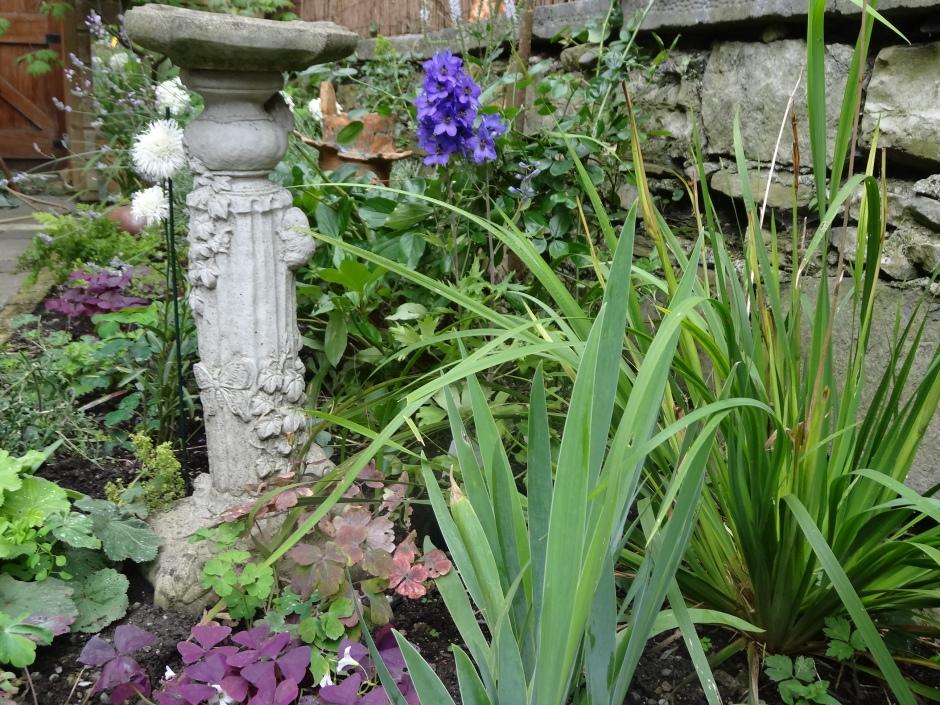 Gardens Aug 2013 022