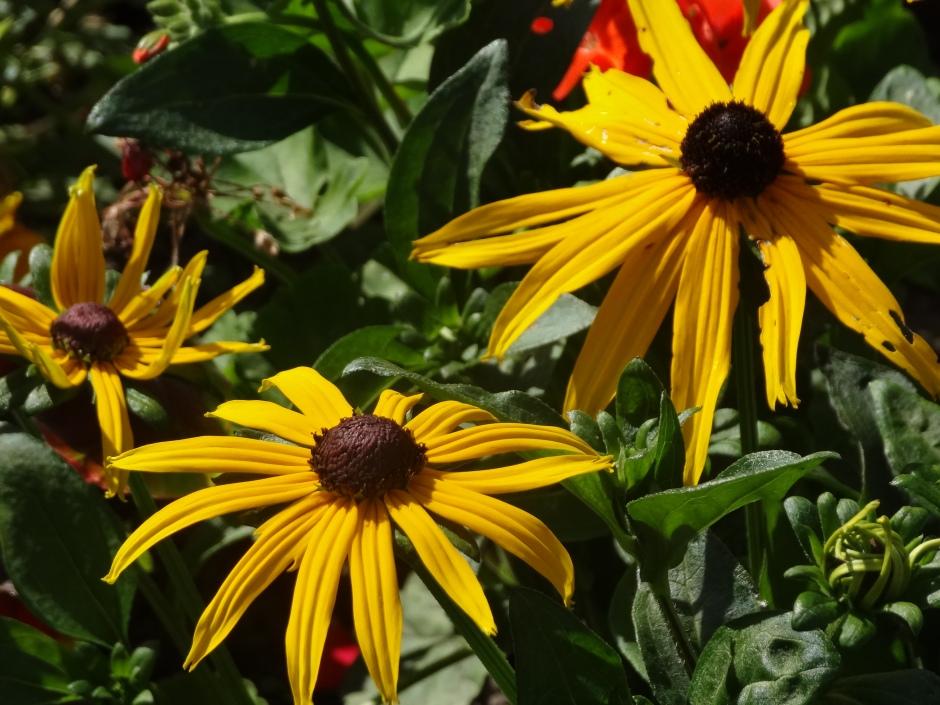 Gardens August 2013 022