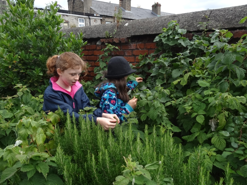 Gardens August 2013 077