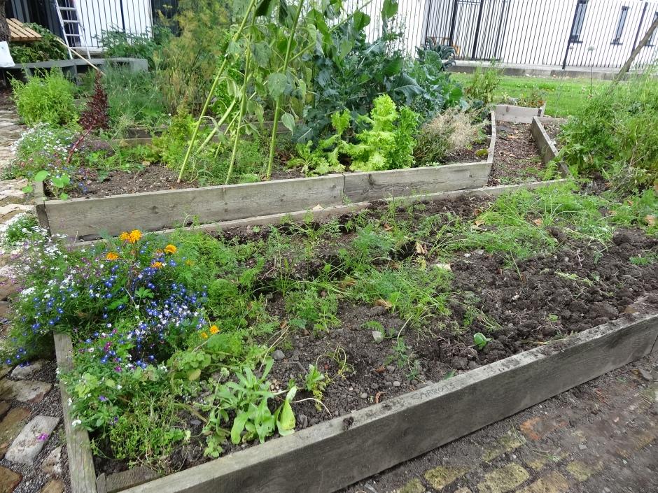 Gardens August 2013 094
