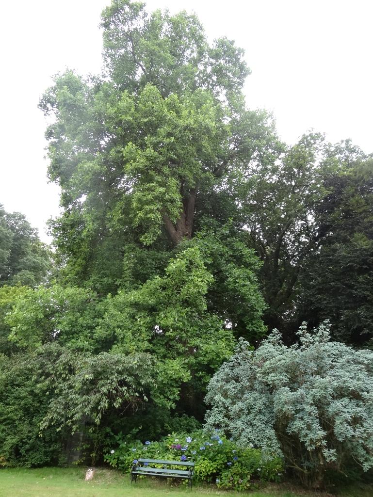 Ireland S Most Romantic Garden Jardin