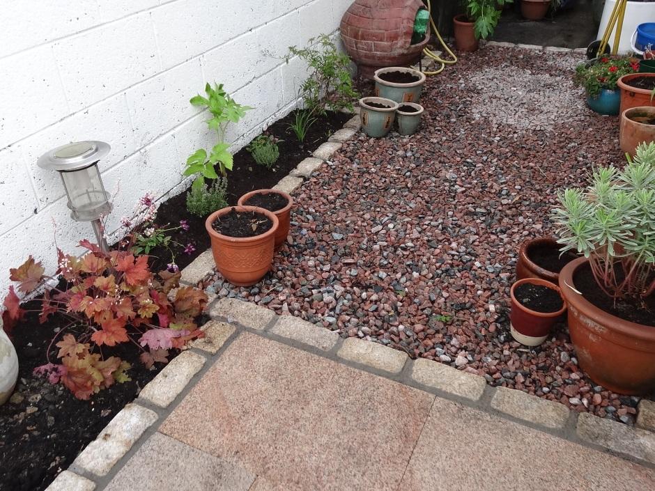 Ann's garden 3 002