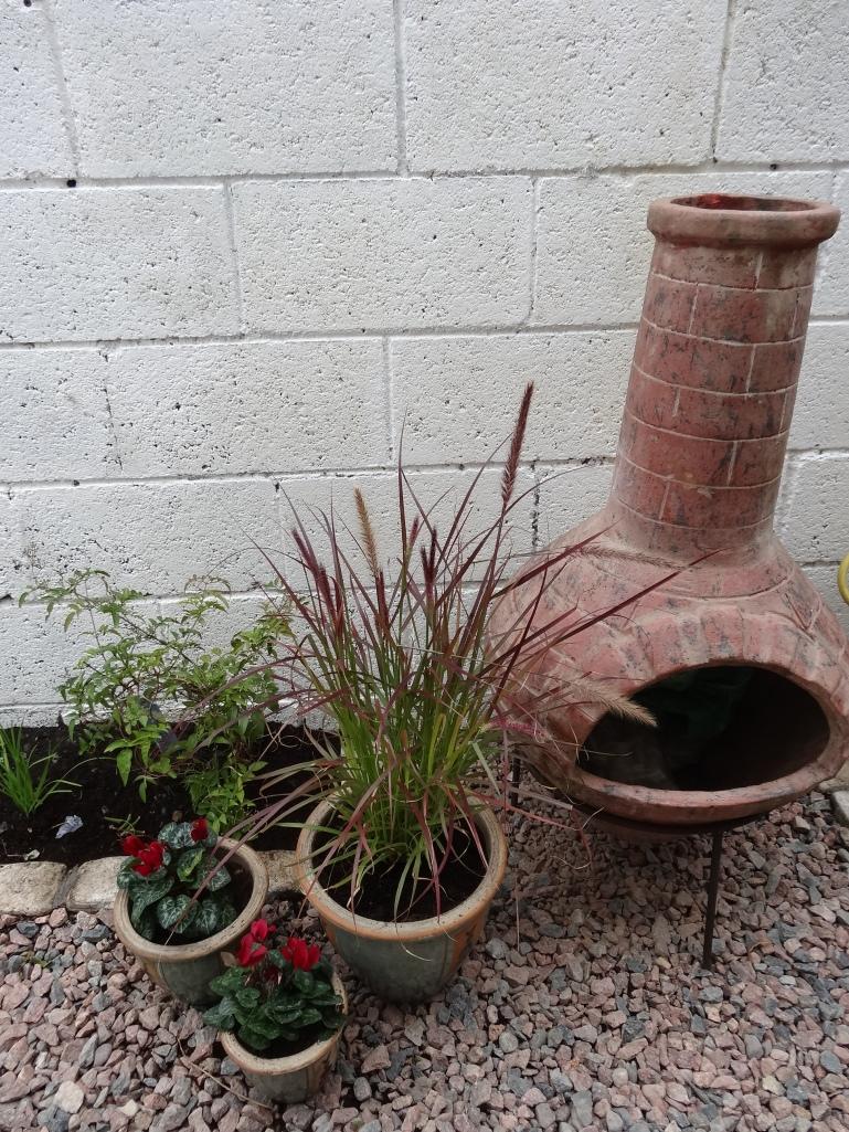 Ann's garden 3 003