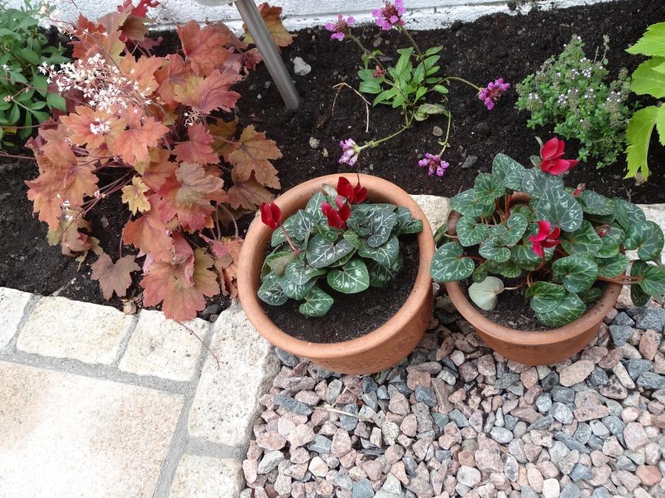 Ann's garden 3 006