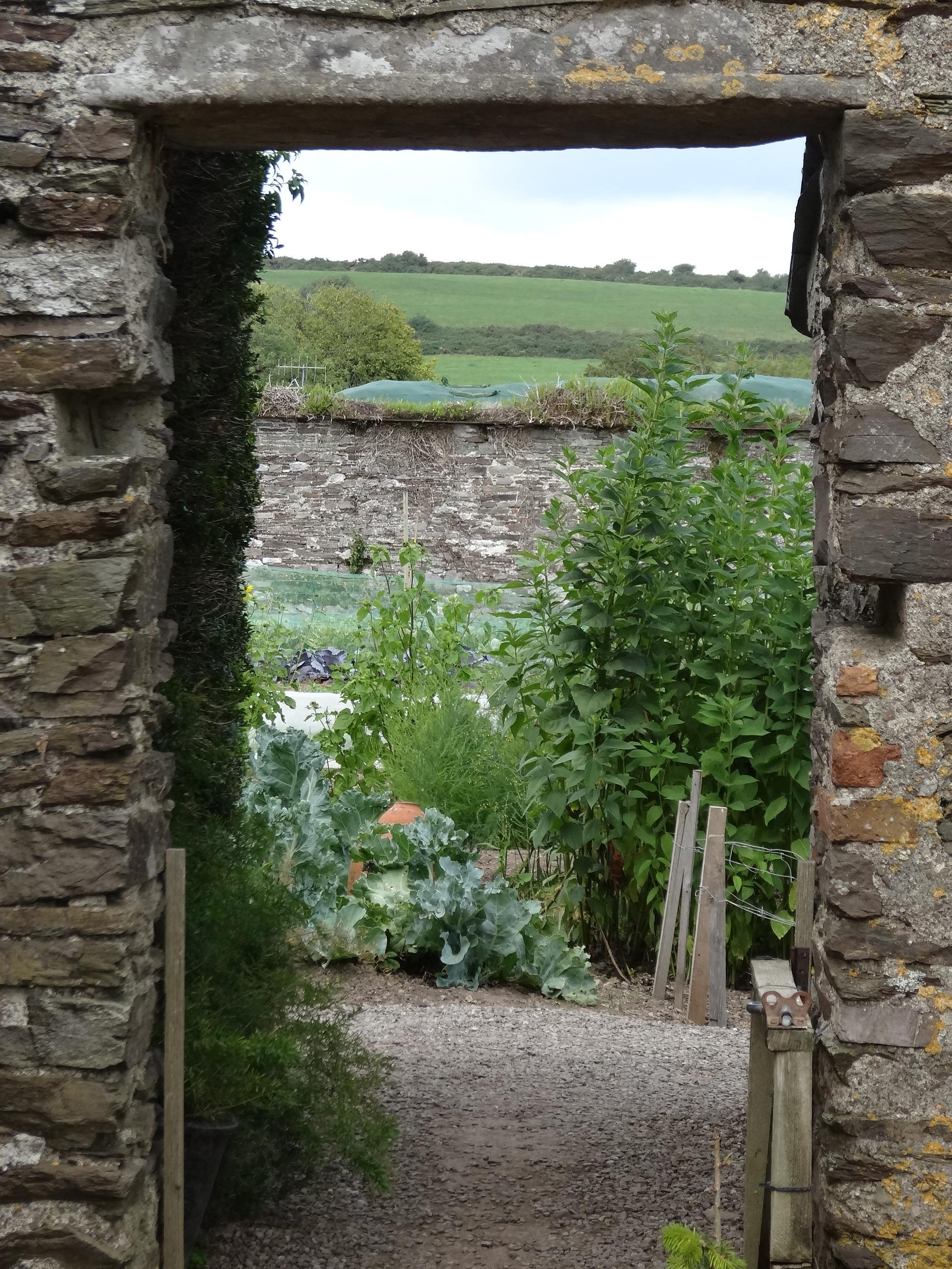 Walled Kitchen Garden Ballymaloe Garden Festival Jardin