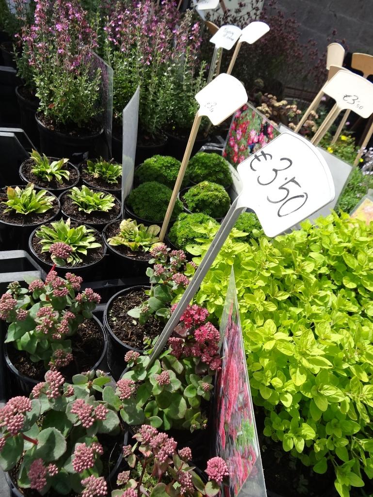 Perennials from Caherhurley Nursery