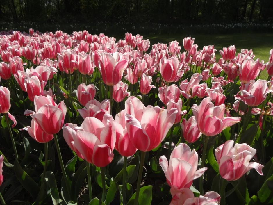 Floralia 2013 019