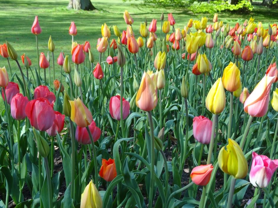 Floralia 2013 022