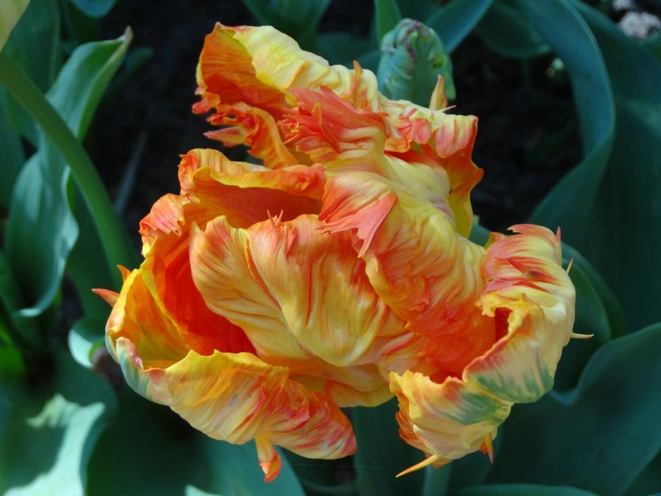 Floralia  031