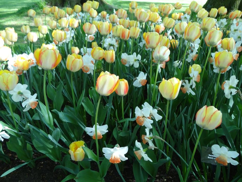 Floralia 2013 041