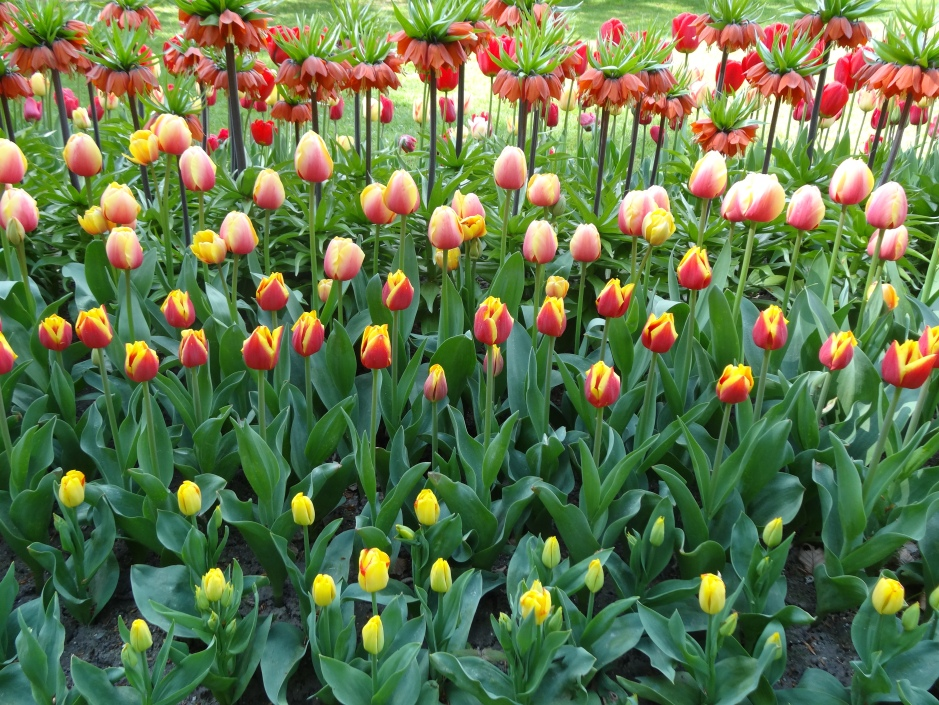 Floralia 2013 105