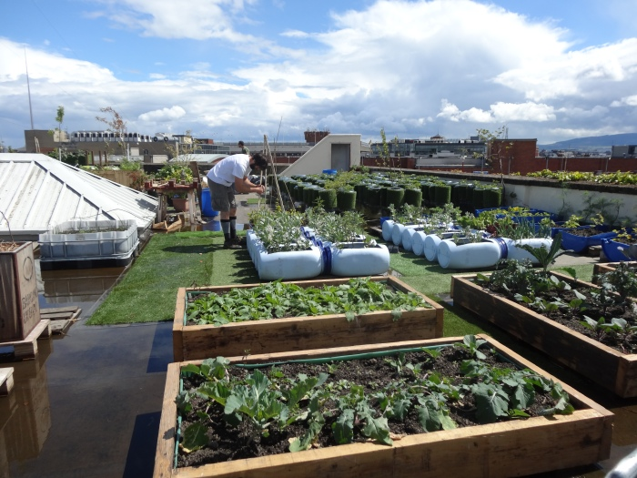 The roof garden on the old Chocolate Factory , Dublin, now relocated