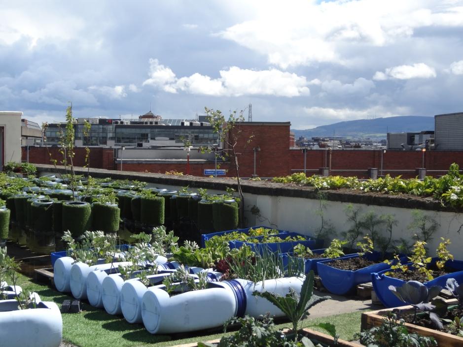 Geraldine's garden 017