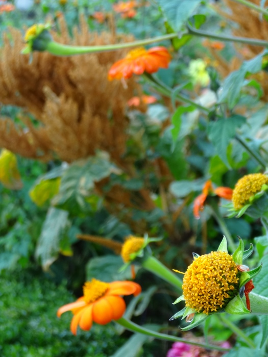 Colour in my garden