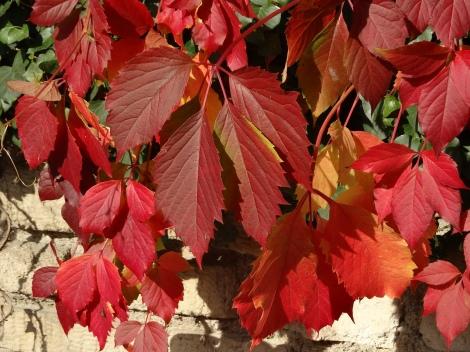 Autumn 2013 690