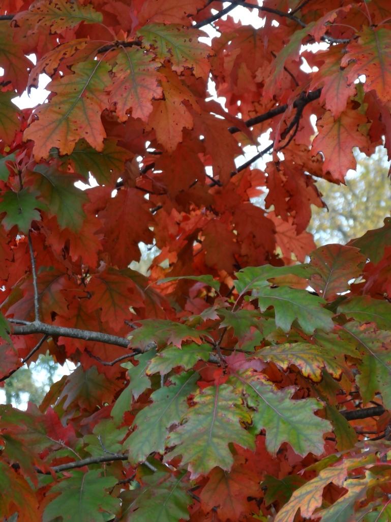 Autumn 2013 718