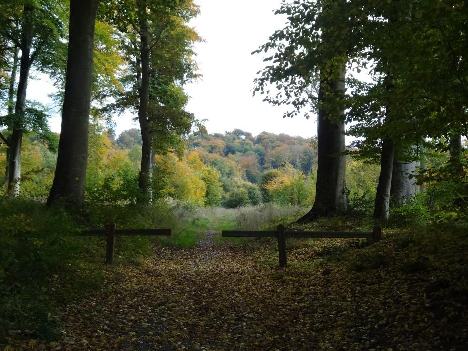 Autumn 2013 743