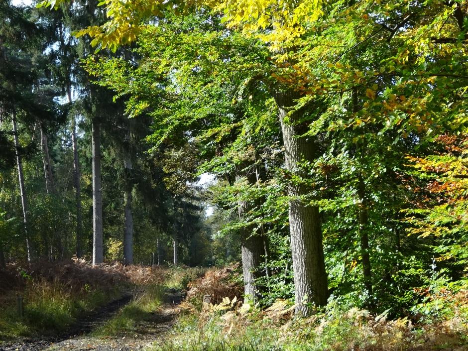 Autumn 2013 752