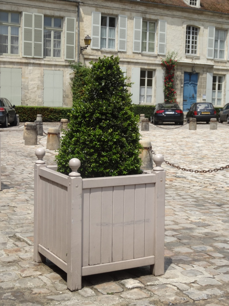 Topiary pyramid in a Versailles tub