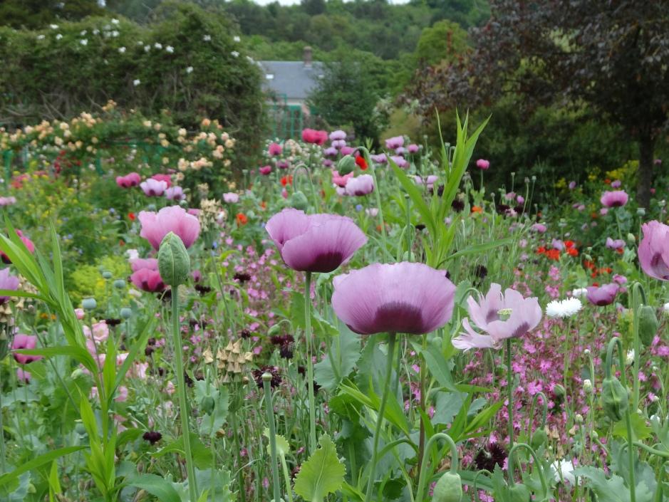 French gardens 2013 058