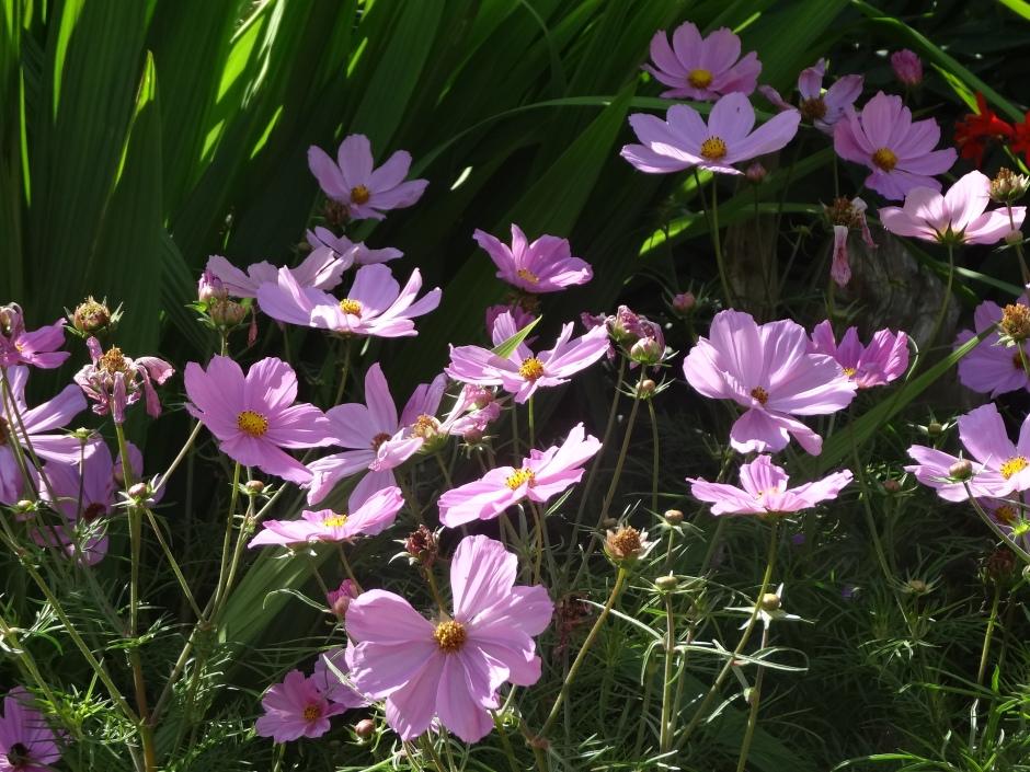 Gardens August 2013 021