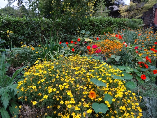 The bright colours of autumn perennials