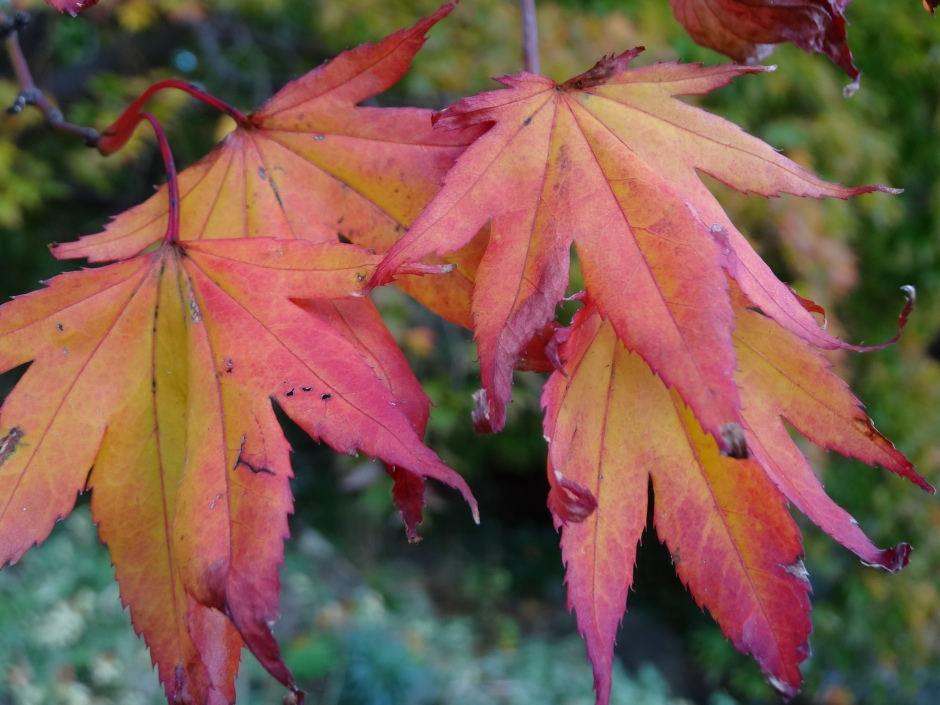 Late autumn 047
