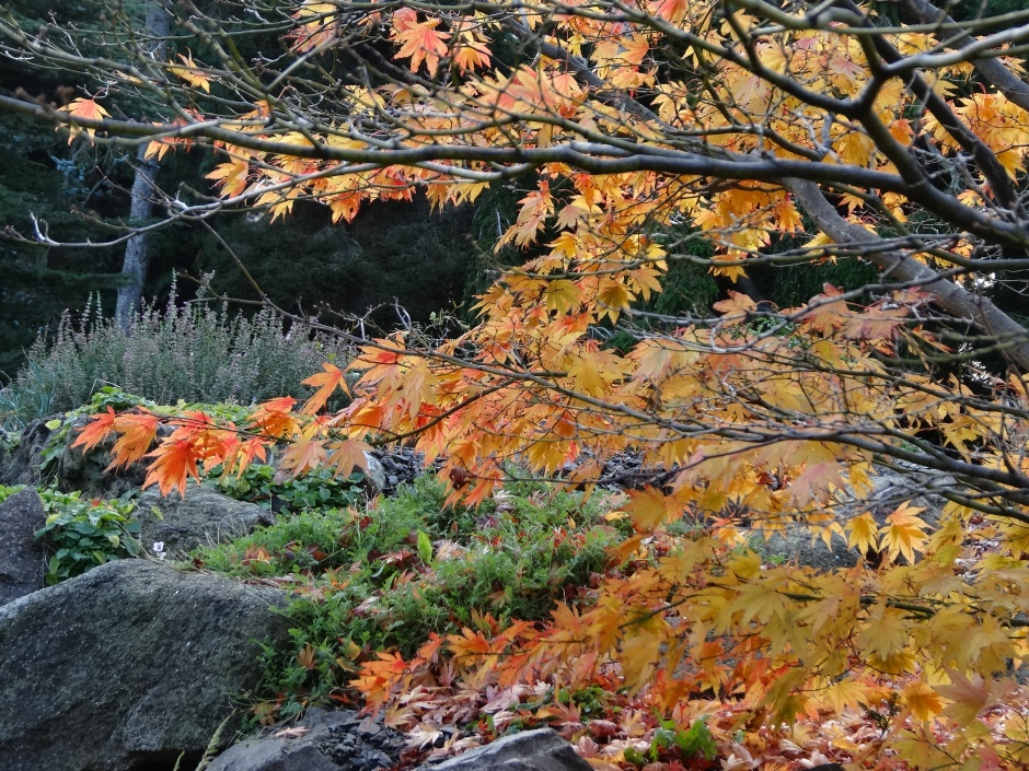Late autumn 048