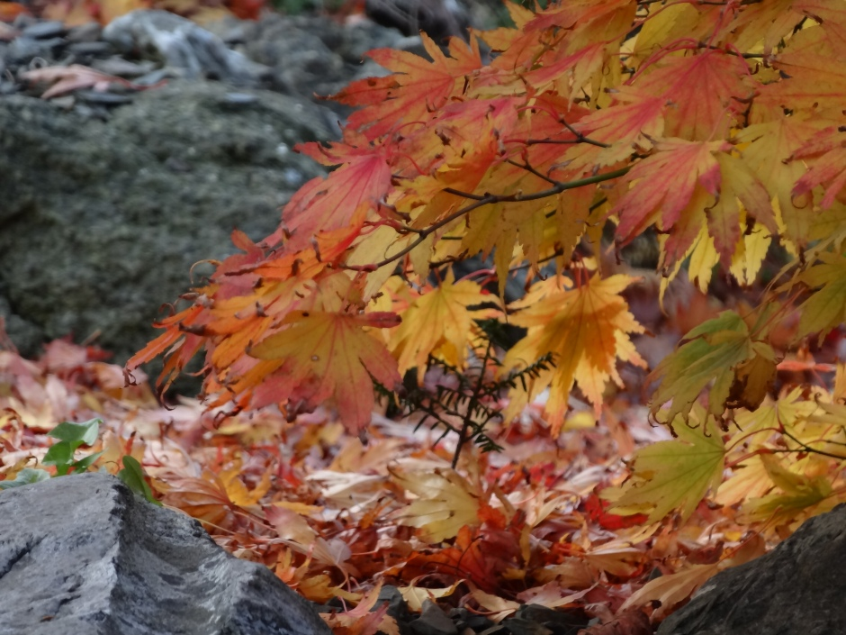 Late autumn 050