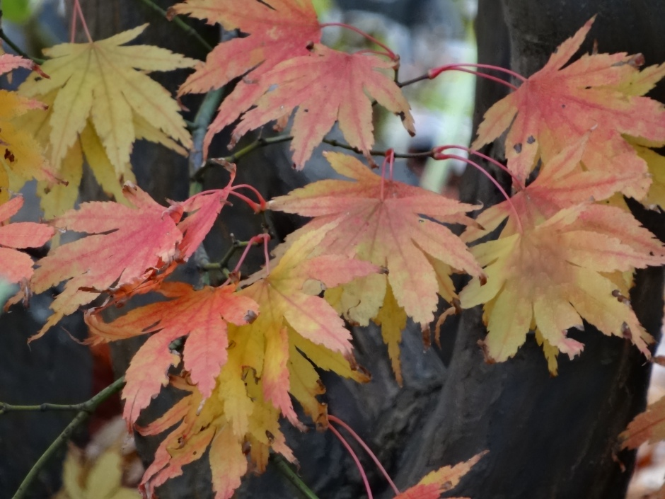 Late autumn 051