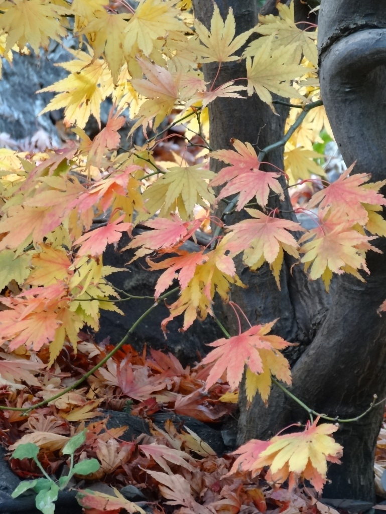 Late autumn 052