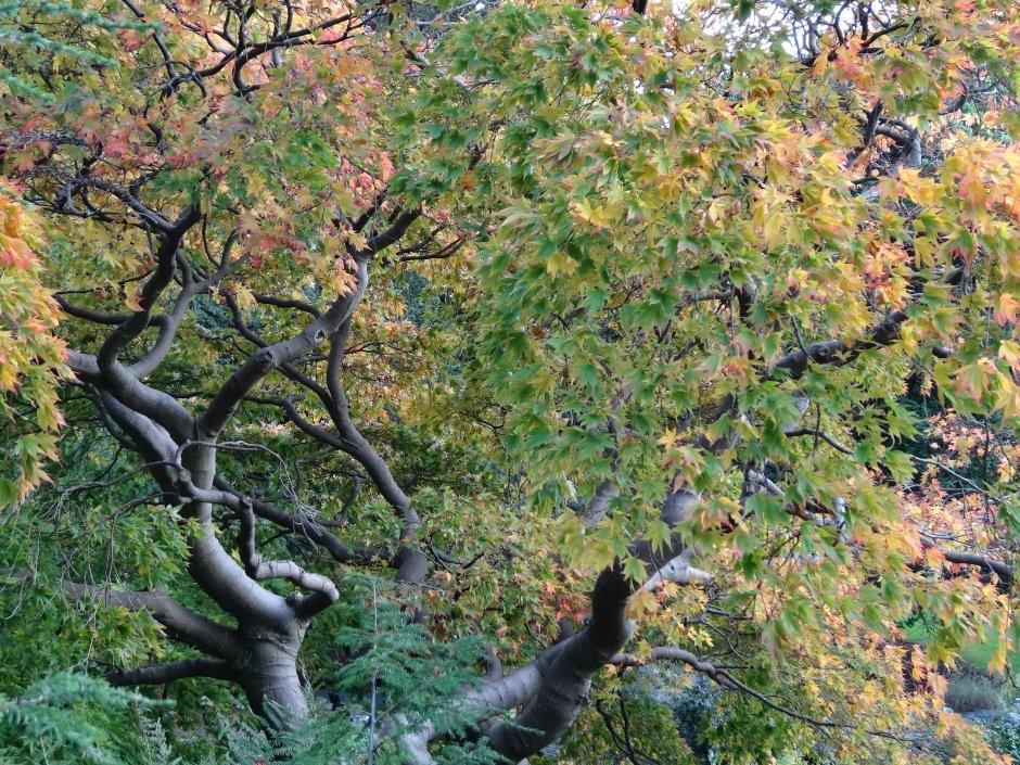 Late autumn 056