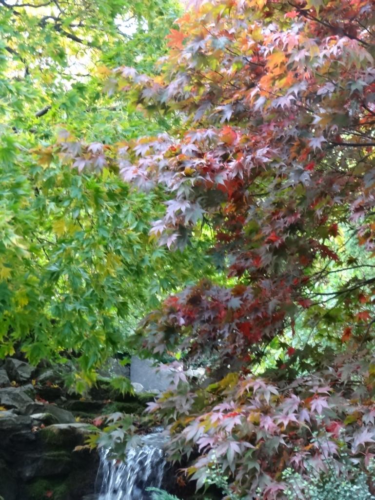 Late autumn 058