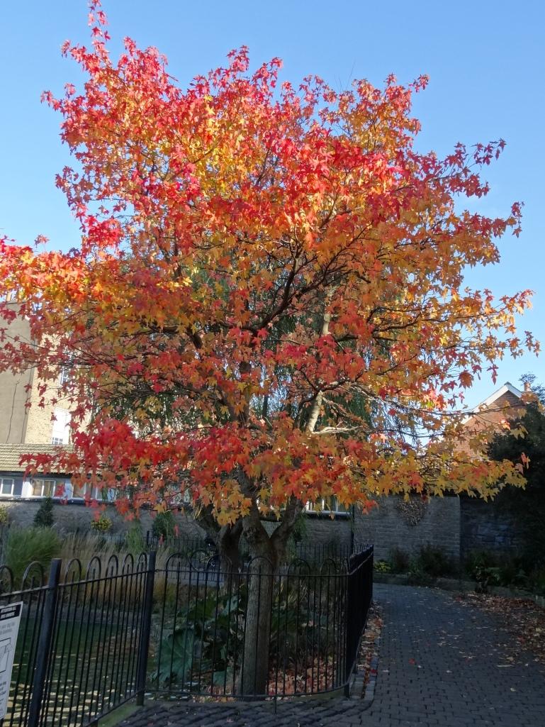 The Basin autumn 009