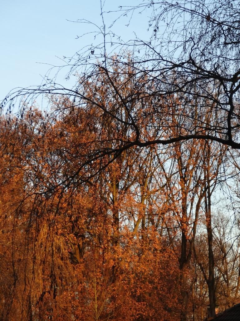 Winter sunlight on the trees