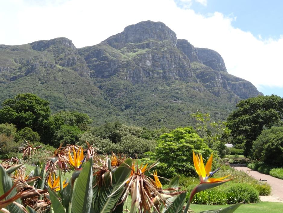 In Kirstenbosch Botanic Gardens