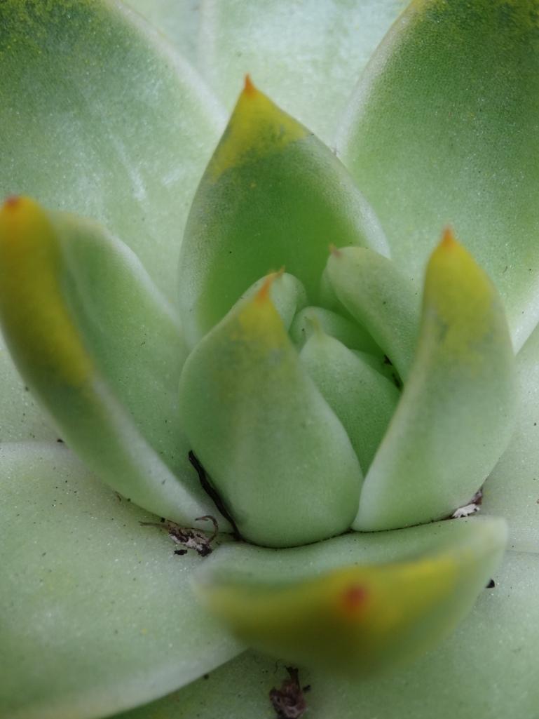 Succulents 001
