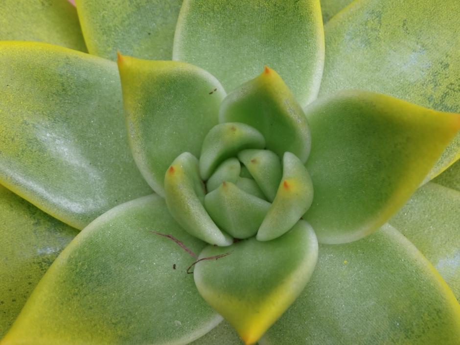 Succulents 003