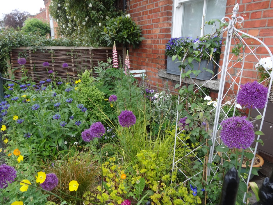 The lime-green Euphorbia contrasting with Alliums and Centaurea