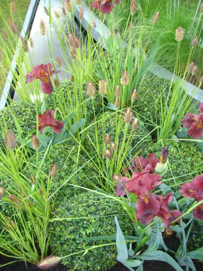Deep red looks more subtle, here mixed with grasses.
