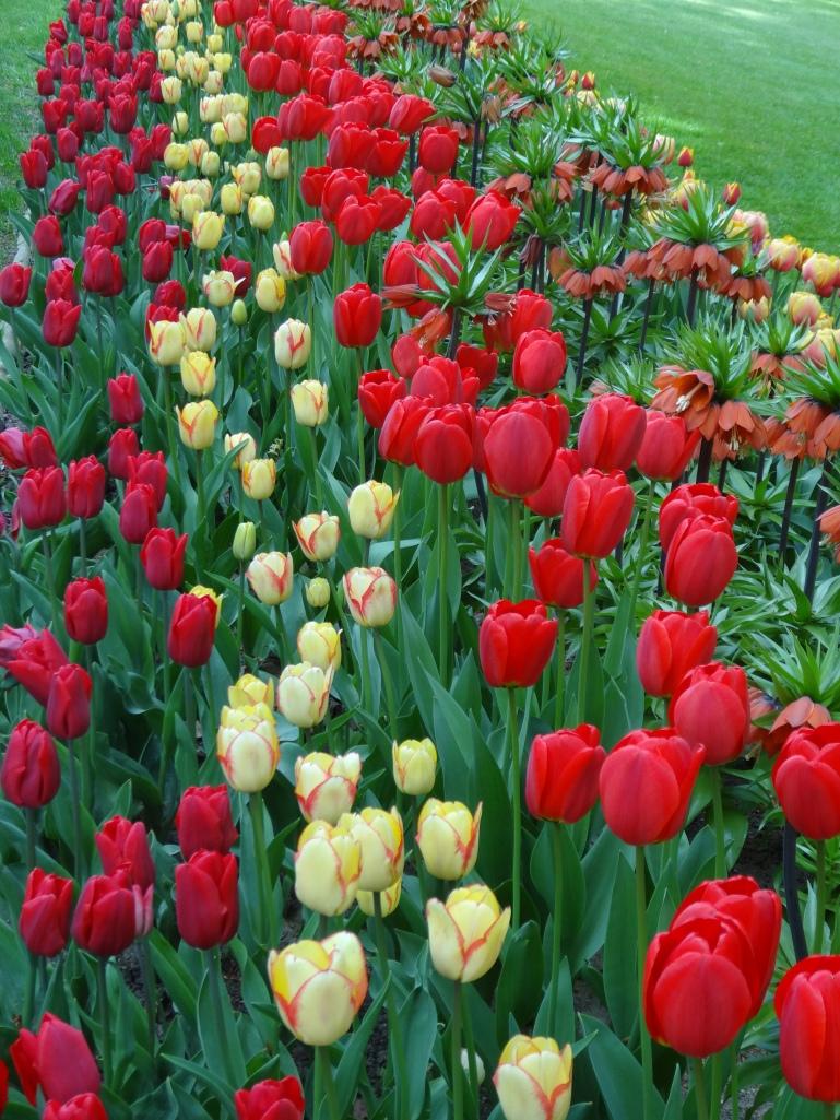 Floralia 2013 107