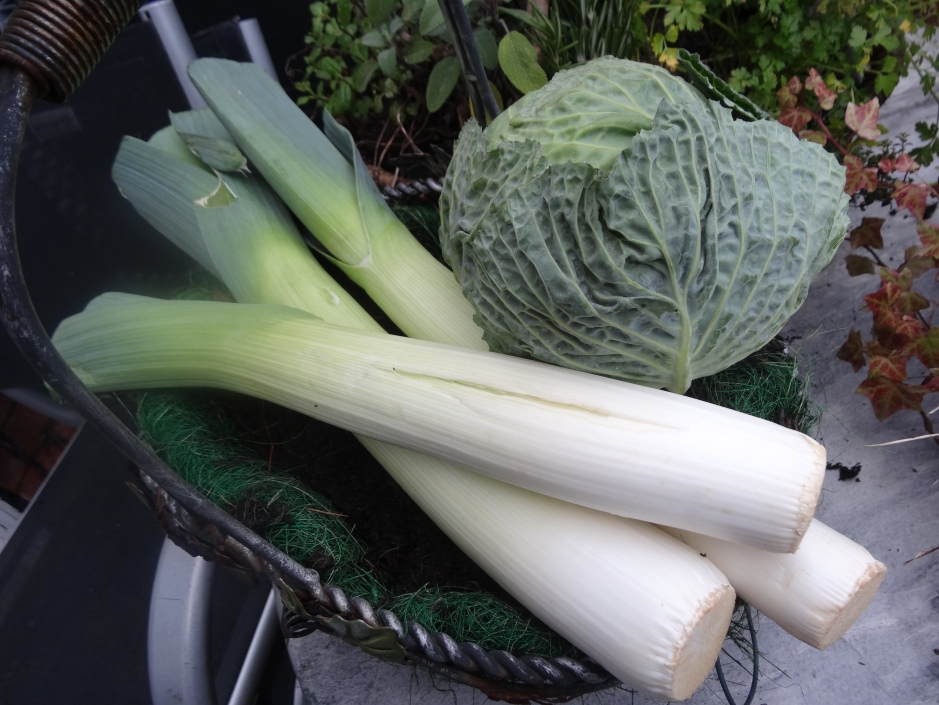 Winter veg : cabbage and leeks