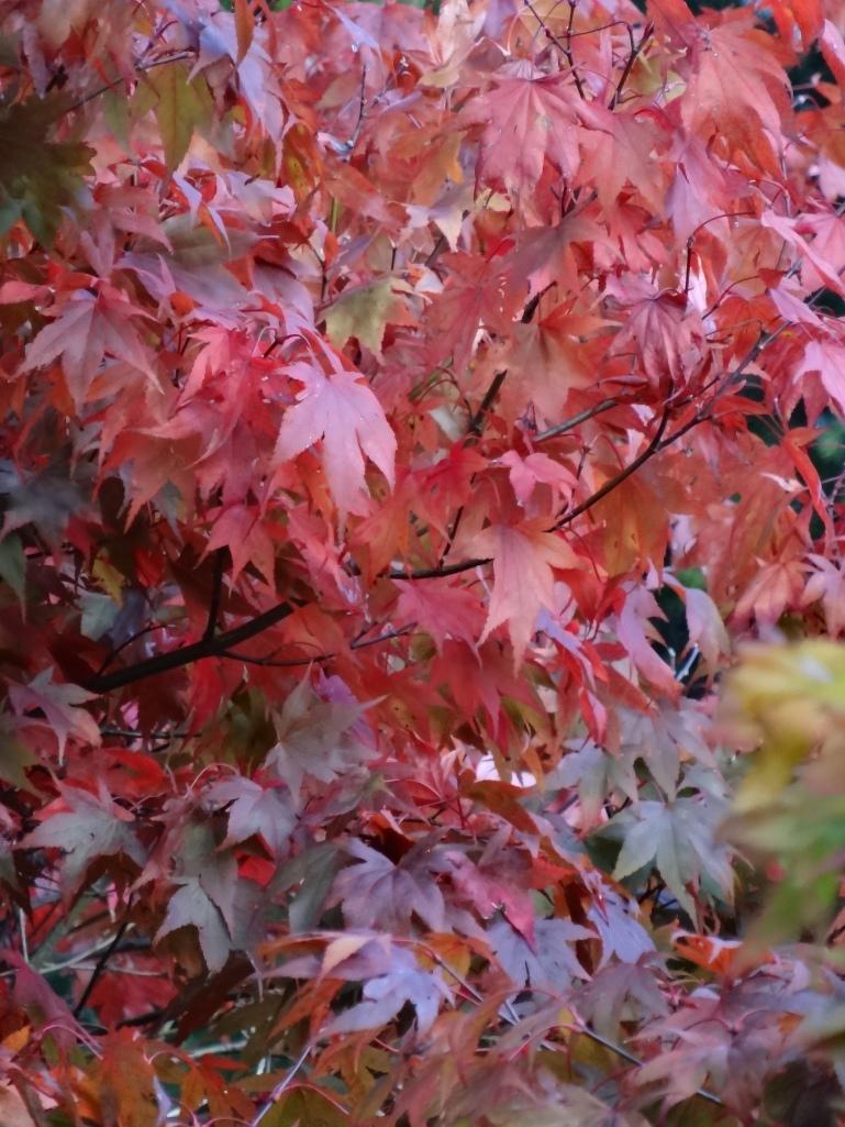 Late autumn 055